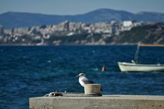 Young seagull perched and standing on sea stone wall in the background of the beach, buildings and the sea. Closeup of young seagull standing at the stone wall Royalty Free Stock Photos