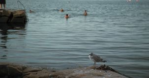 A young seagull on a rock with children and families bathing and playing in the background.