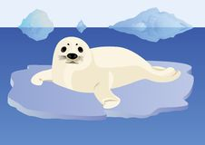 A young seal on an ice floe Stock Image