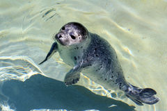 A young seal Stock Photo