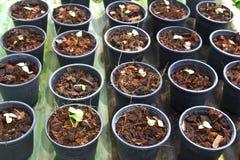 Young seeding Stock Photos