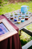 Young seedling in ceramic pots. On wooden table with kiryllic names stock image