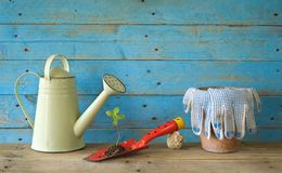 Young seedling and gardening utensils Stock Photo