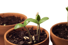 Young Seedling Plants Growing Healthy Stock Photos