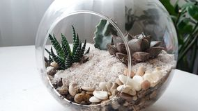 Succulents and cactus in a glass florarium on a light background royalty free stock photos