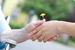 Young and senior women holding a dandelion Royalty Free Stock Photos