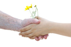 Young and senior women holding yellow flowers Royalty Free Stock Photos