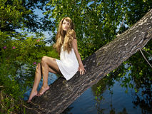 Young sensual lady on tree. Fashion portrait of young sensual lady on tree Royalty Free Stock Photo