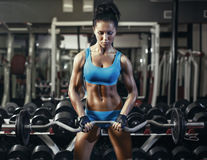 Young sexy brunette girl in the gym doing biceps exercise with barbell Stock Images