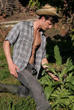 Young sexy farmer picking artichoke Royalty Free Stock Photography