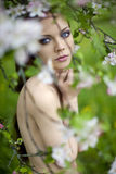 Young girl near blooming apple tree Stock Photography