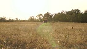 Girl riding a horse in a windy field. Wide shot. stock video