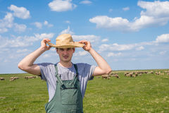 The young shepherd. Farm life,  the young man kept a flock of sheep Stock Images