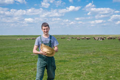 The young shepherd. Farm life,  the young man kept a flock of sheep Royalty Free Stock Image