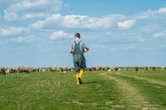 The young shepherd. Farm life,  the young man kept a flock of sheep Stock Photo