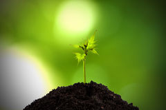 Young shoot of the plant Stock Images