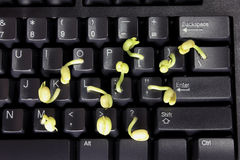 Young Shoots on Computer Keyboard Stock Photos