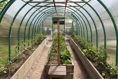Young shoots of vegetables in the greenhouse. Temperature control Stock Image