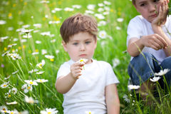 Young siblings in field Stock Photography