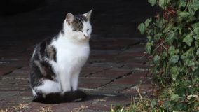 Young single cat on a farm stock video footage