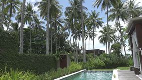 The young slender woman has a rest in the pool in the tropical resort under palm trees.  stock video