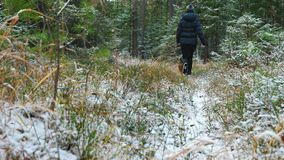 Young woman runs in the forest with a Airedale Terrier dog. Young slim woman runs in the forest with a Airedale Terrier dog. The first snow in the autumn forest stock video footage
