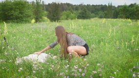 Young slim woman is stroking big white lying dog and smiling in a field with many small white flowers, in summer day. Summer time stock video