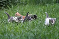 Young family cats. Young small cats playing in the grass Royalty Free Stock Photos