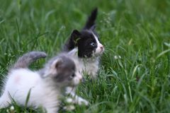 Young family cats. Young small cats playing in the grass Stock Image