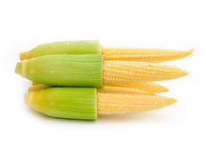 Young small corn Royalty Free Stock Photography