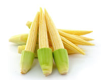 Young small corn Royalty Free Stock Photo
