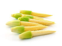 Young small corn stock photo