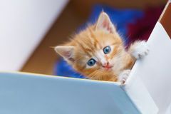 Young small kitten lean out of the box and looking. Young small kitten lean out of box and looking Stock Images