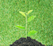 Young small new life green plant Stock Images