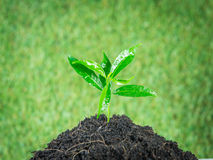 Young small new life green plant Royalty Free Stock Photos