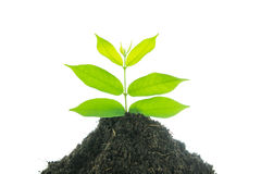Young small new life green plant Royalty Free Stock Images