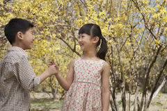 Young and smiling brother and sister showing each other the yellow blossoms in the park in springtime Royalty Free Stock Image