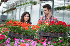 Young smiling florists man and woman working in the greenhouse Stock Images