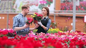 Young smiling florists working in the greenhouse. Florists satisfied with their work. Gardeners working with flowers in greenhouse. Young smiling florists men stock video