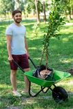 Young smiling man with new trees. In wheelbarrow royalty free stock photos