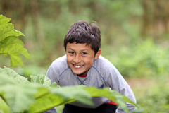 Young smiling mixed race boy in woods Royalty Free Stock Photo
