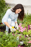 Young smiling woman florist working in the greenhouse Royalty Free Stock Images