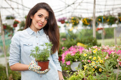 Young smiling woman florist working in the greenhouse Royalty Free Stock Photos
