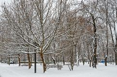 Snow-covered trees Royalty Free Stock Photo