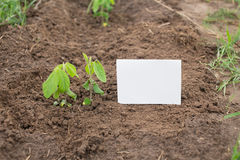Young soy plant on a farm Stock Photos