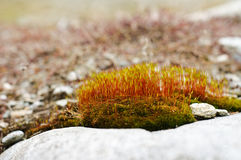 Young Sphagnum Stock Photos