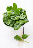 Young spinach Stock Photography