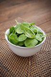 Young spinach Royalty Free Stock Images