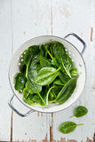 Young spinach Stock Image