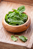 Young spinach Royalty Free Stock Photos